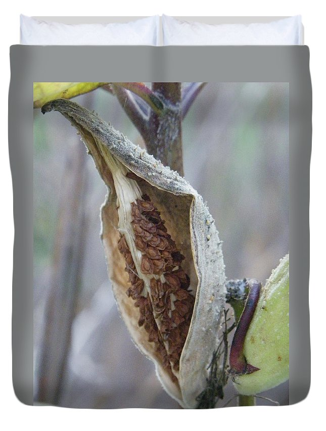 Nature Duvet Cover featuring the photograph Milkweed by Peggy King