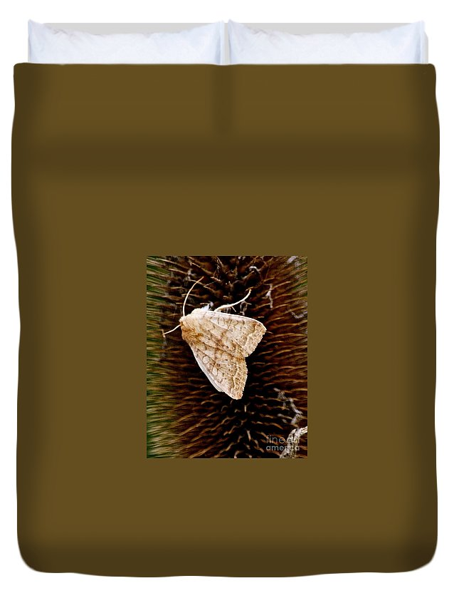 Miller Moth Duvet Cover featuring the photograph Miller Moth by Christine Scott