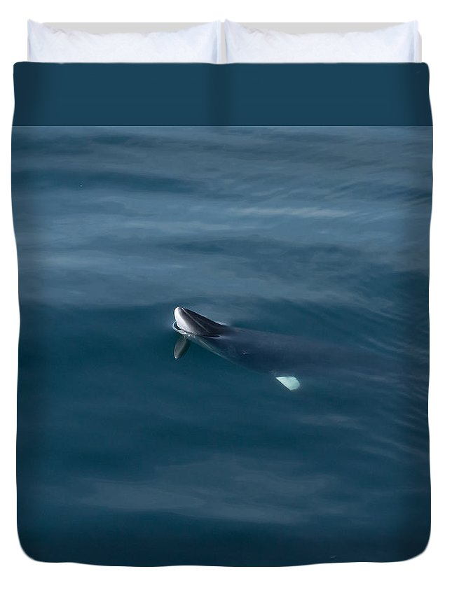 Minke Duvet Cover featuring the photograph Minke Whale At Play by Patrice Hatcher