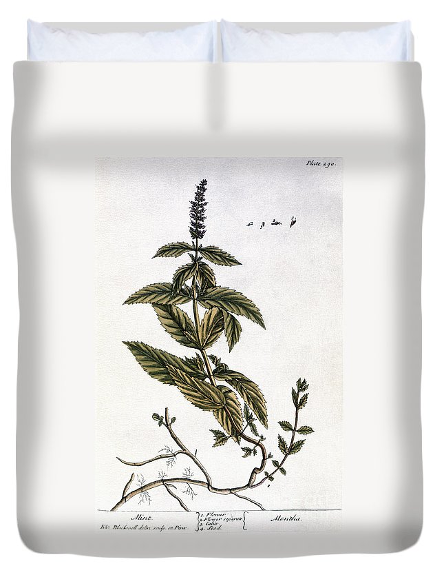 1730s Duvet Cover featuring the photograph Mint Plant, 1735 by Granger
