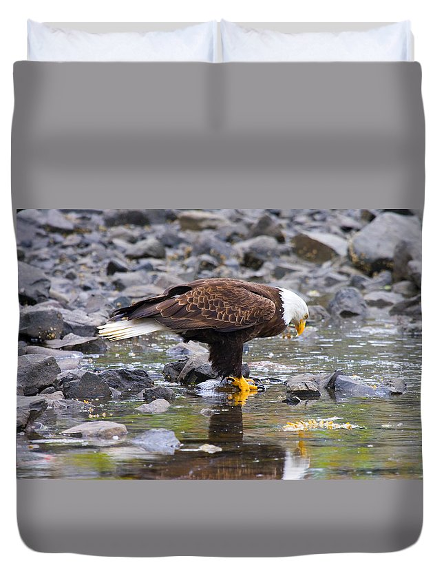 Eagle Duvet Cover featuring the photograph Mirror Mirror by Mike Dawson
