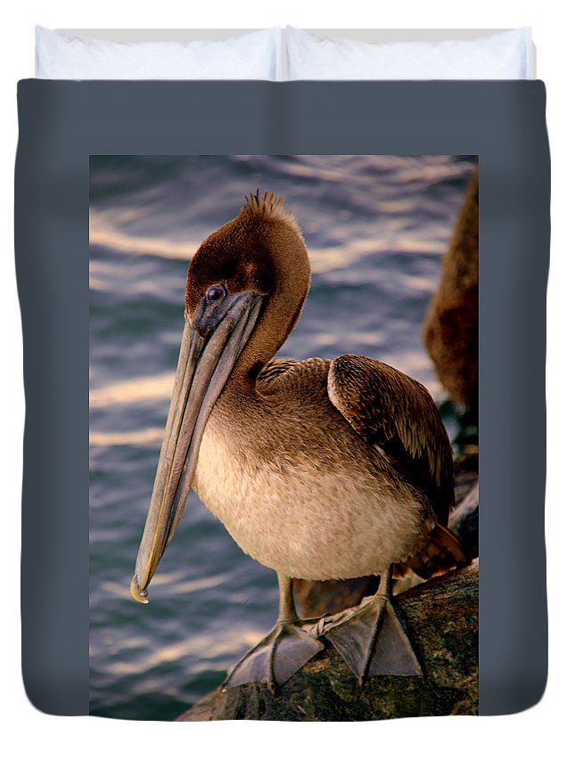 Pelican Duvet Cover featuring the photograph Mister Pelican by Susanne Van Hulst