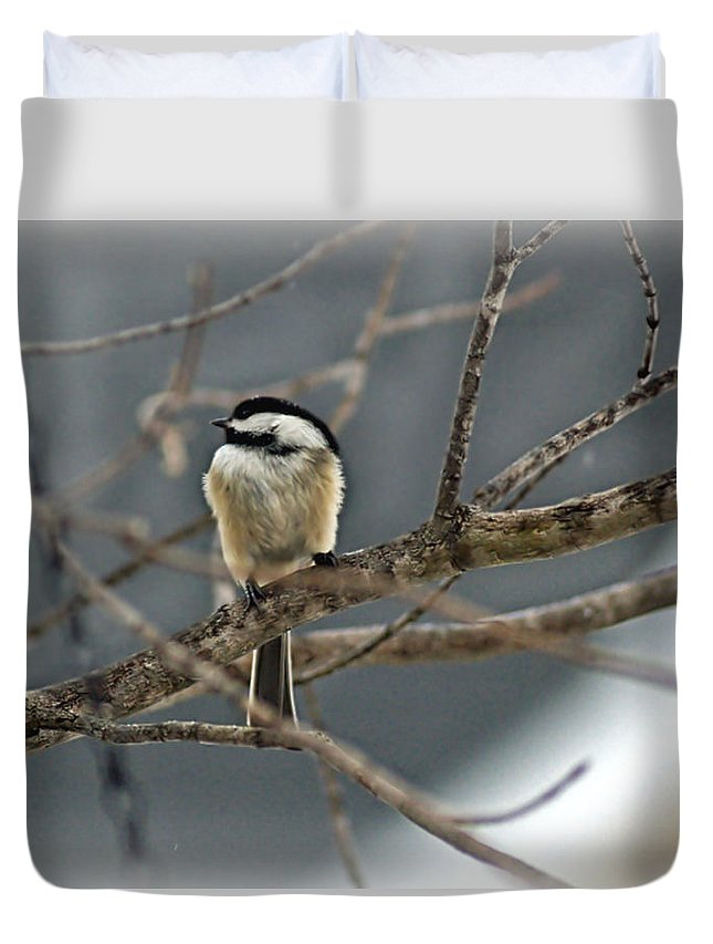 Lone Bird Duvet Cover featuring the photograph Misty Sentry by Catherine Melvin