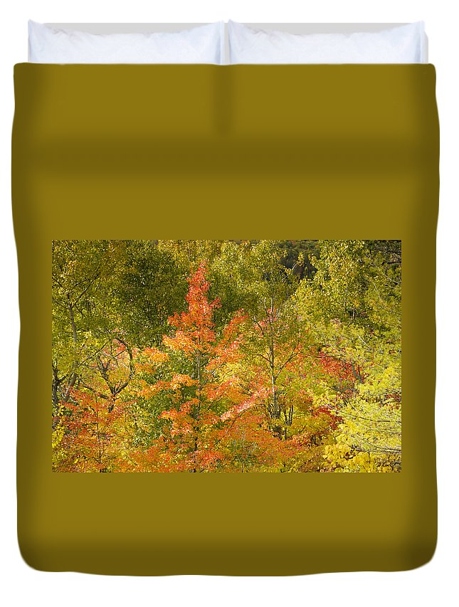 Tree Duvet Cover featuring the photograph Mixed Autumn by Phill Doherty