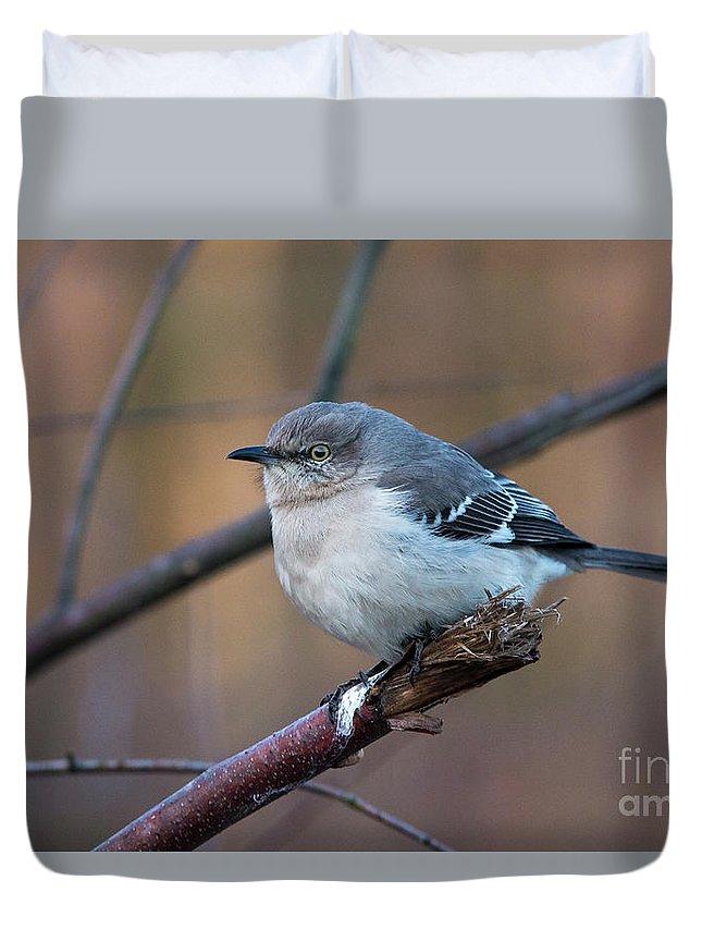 Mockingbird Duvet Cover featuring the photograph Mockingbird by Eric Killian