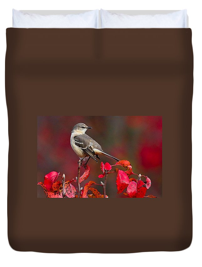 Mockingbird Duvet Cover featuring the photograph Mockingbird On Red by William Jobes