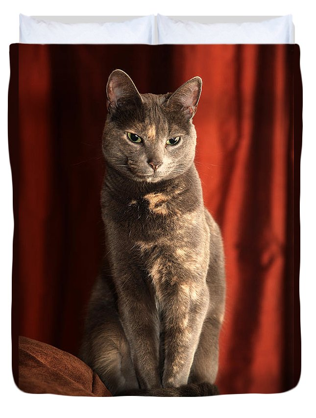 Cat Duvet Cover featuring the photograph Mollie by Amanda Barcon