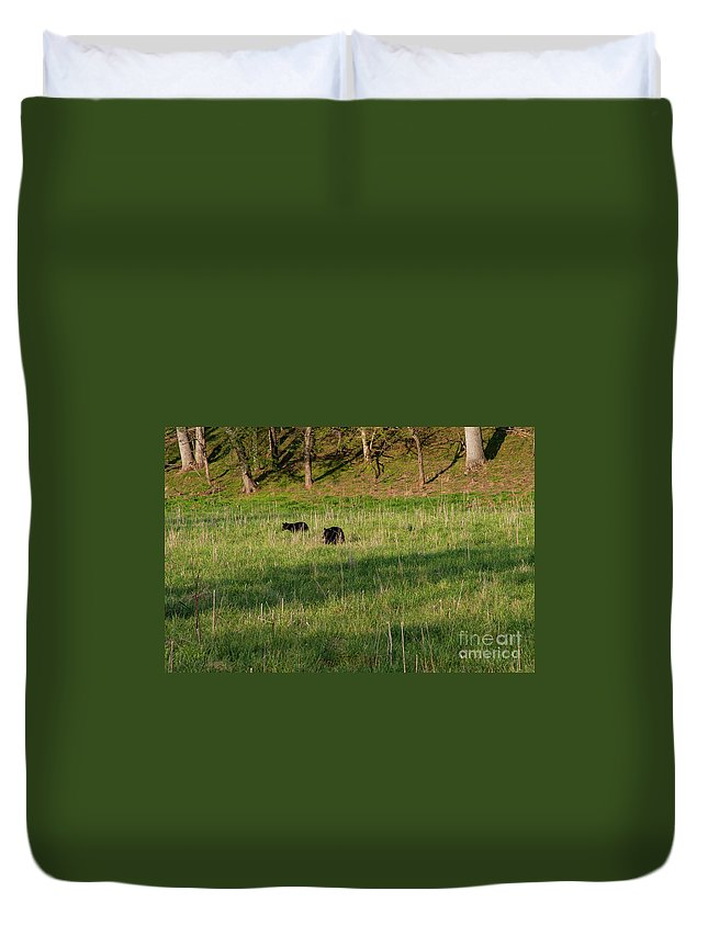 Cades Cove Duvet Cover featuring the photograph Mom And Cub by Bob Phillips