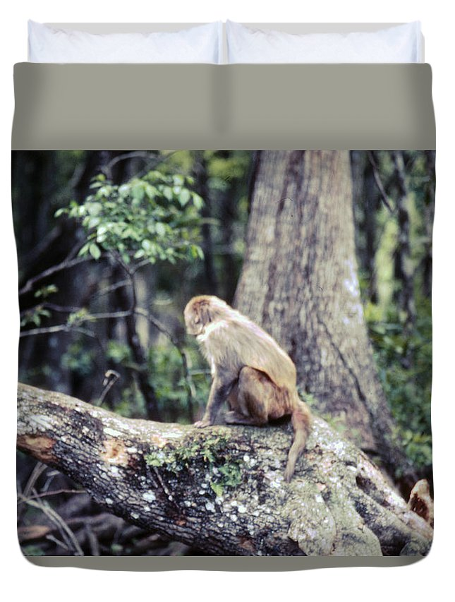 Monkey Duvet Cover featuring the photograph Momkeyshines by Delbert Larkin