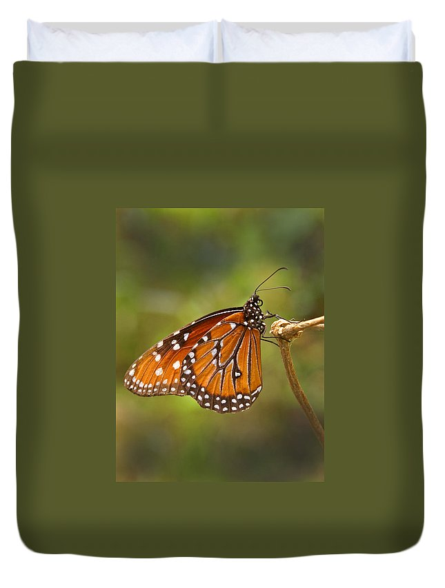 Monarch Duvet Cover featuring the photograph Monarch Butterfly by Heather Coen