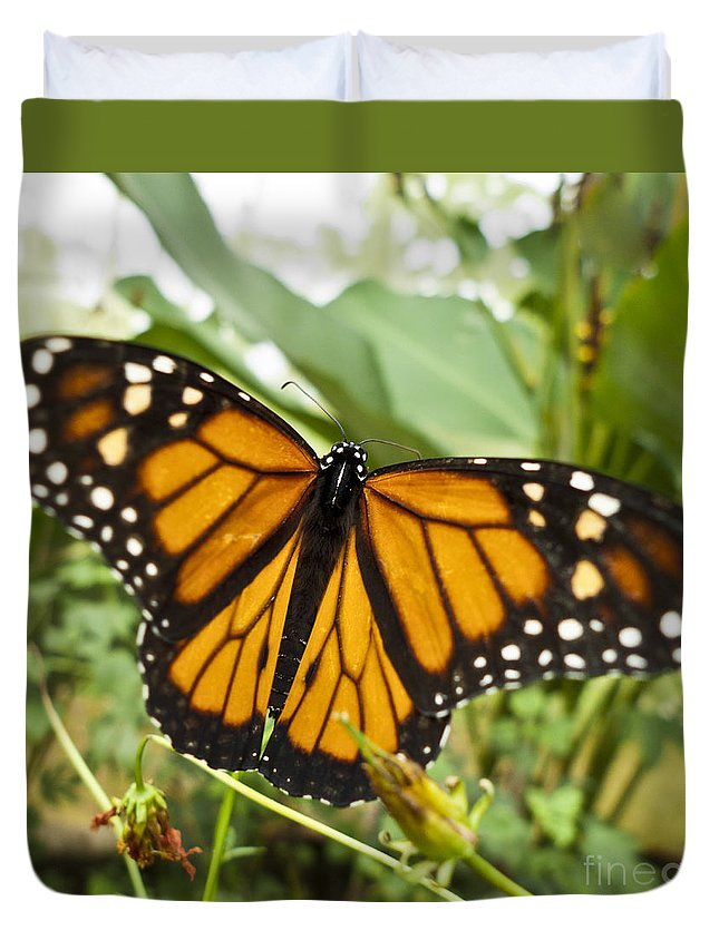 Nature Duvet Cover featuring the photograph Monarch Butterfly II by Heiko Koehrer-Wagner