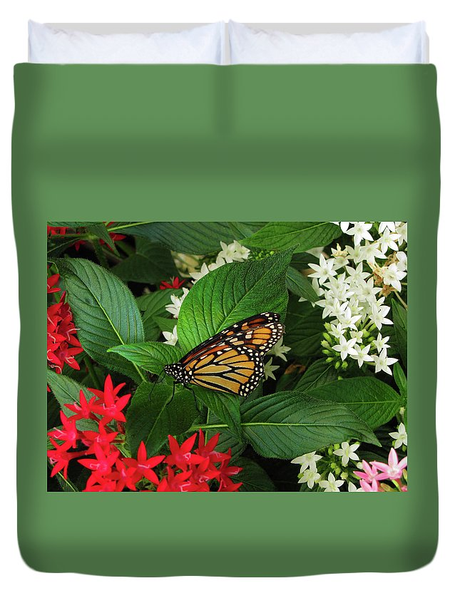 Olbrich Duvet Cover featuring the photograph Monarch Framed by Jessica Killingbeck
