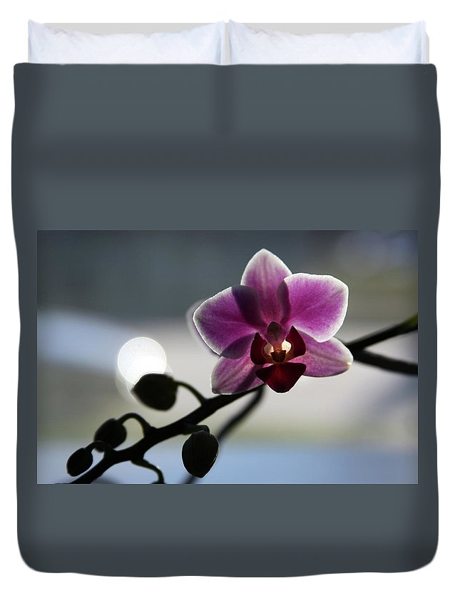 Pink Orchid Duvet Cover featuring the photograph Moonlight And Orchid by John Lautermilch