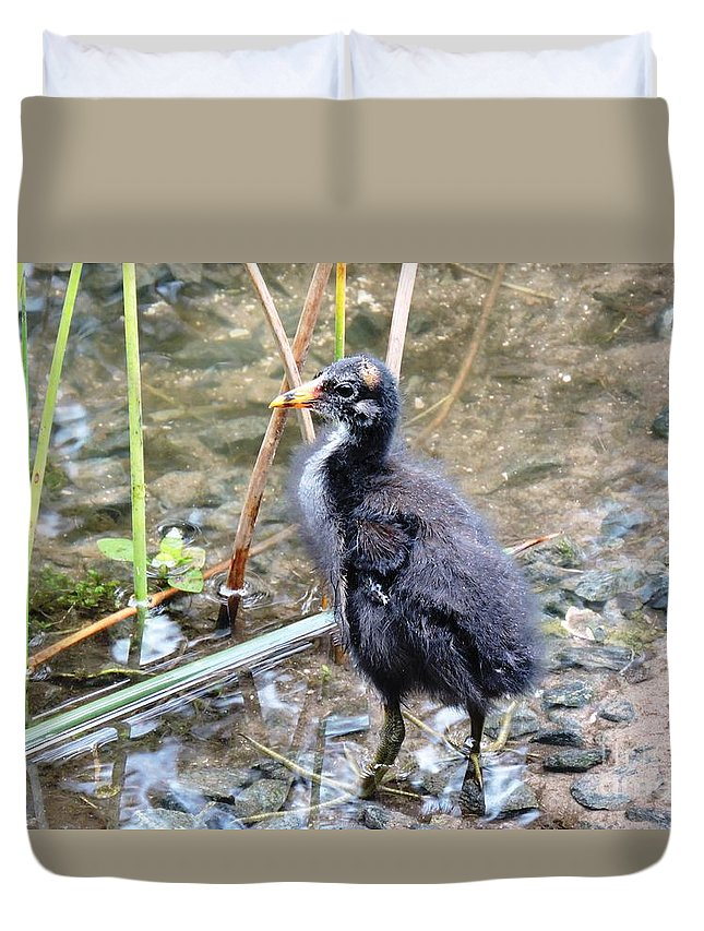Long Toes Duvet Cover featuring the photograph Moorhen Chick by Beth Williams