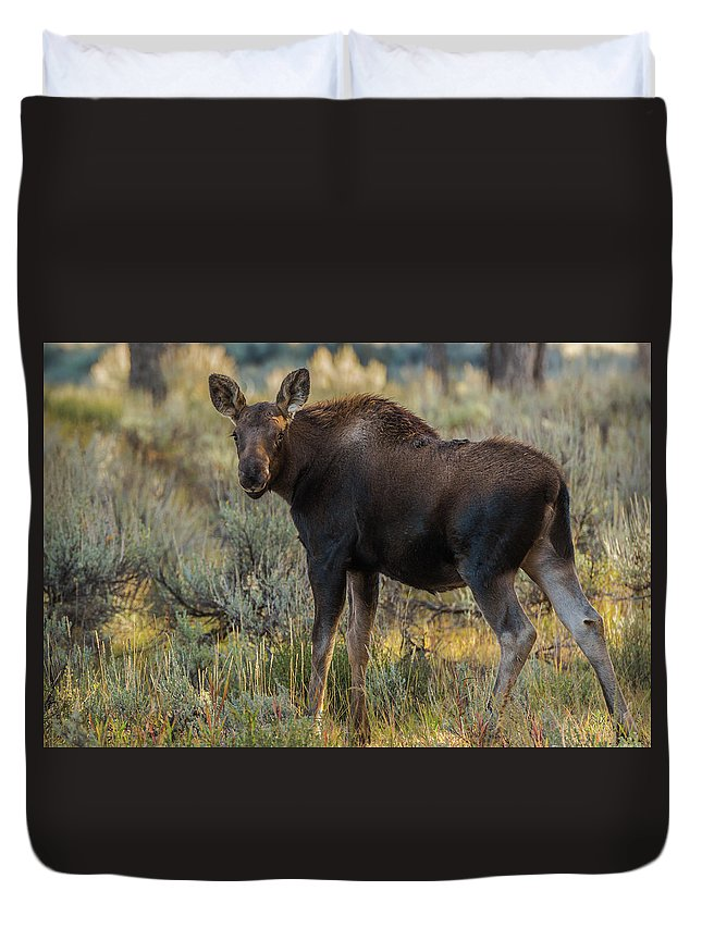 Fall Duvet Cover featuring the photograph Moose Calf In Fall Colors by Yeates Photography