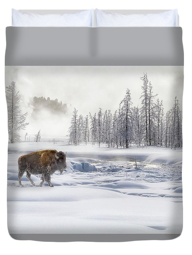 Yellowstone Duvet Cover featuring the photograph Morning Bison 4 7912-4 by Karen Celella