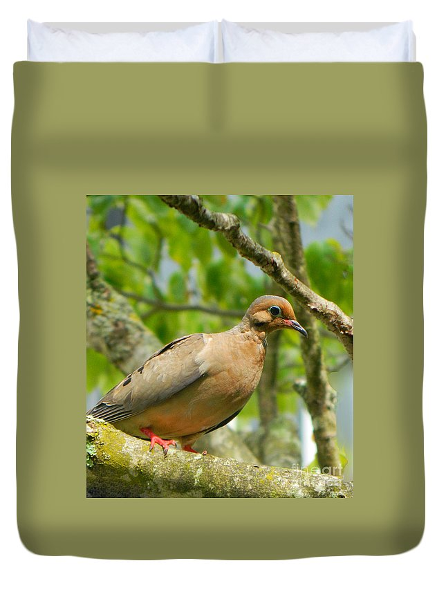 Morning Dove Duvet Cover featuring the photograph Morning Dove by Emmy Vickers
