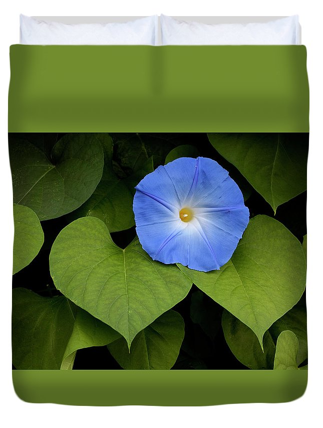Morning Glory Duvet Cover featuring the photograph Morning Glory by George Sanquist