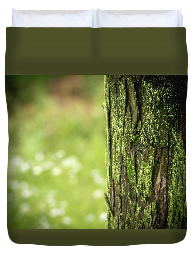 Tree Duvet Cover featuring the photograph Moss by Hyuntae Kim