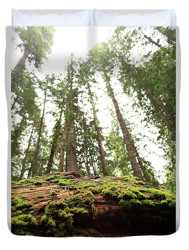 Moss Duvet Cover featuring the photograph Moss On A Log Under The Cedars by Tracy Chappell