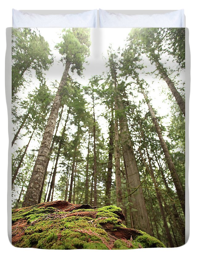 Moss Duvet Cover featuring the photograph Moss Under The Cedars by Tracy Chappell
