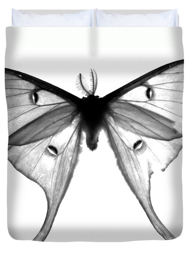 Moth Duvet Cover featuring the photograph Moth by Amanda Barcon