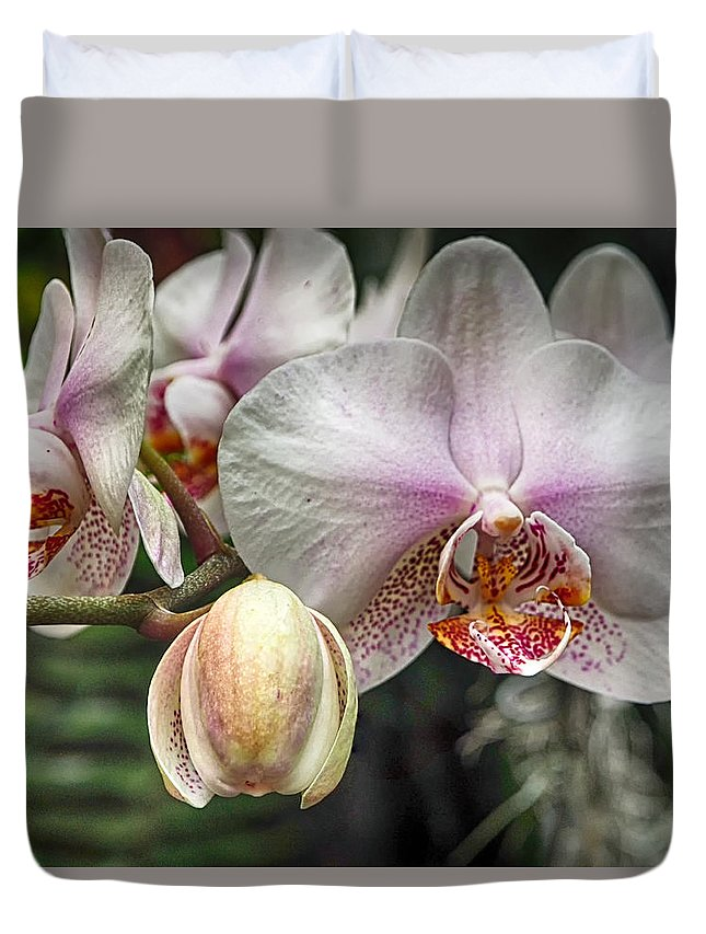 Orchid Duvet Cover featuring the photograph Moth Orchid by C H Apperson