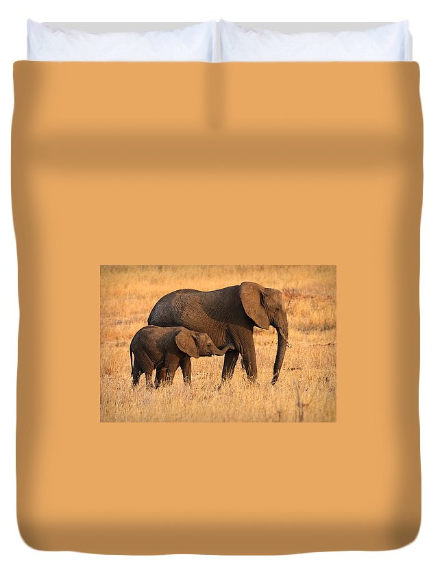 3scape Photos Duvet Cover featuring the photograph Mother And Baby Elephants by Adam Romanowicz
