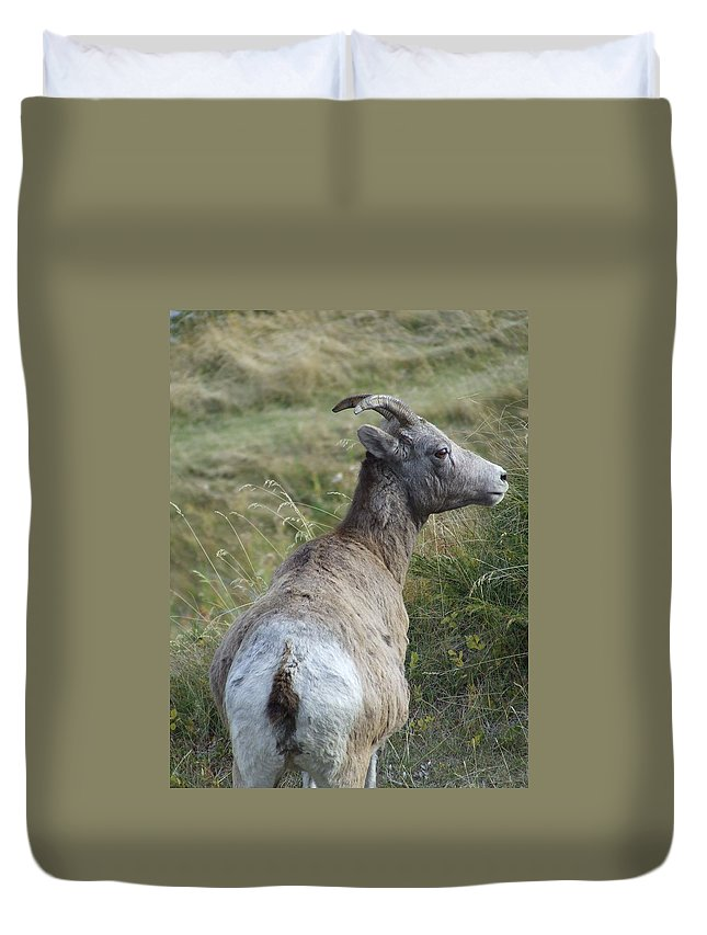 Bighorn Sheep Duvet Cover featuring the photograph Mother Bighorn by Tiffany Vest