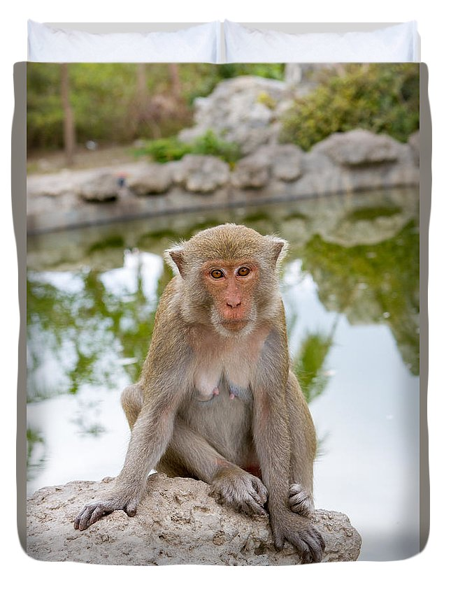 Dara Gor Duvet Cover featuring the photograph Mother Monkey by Dara Gor