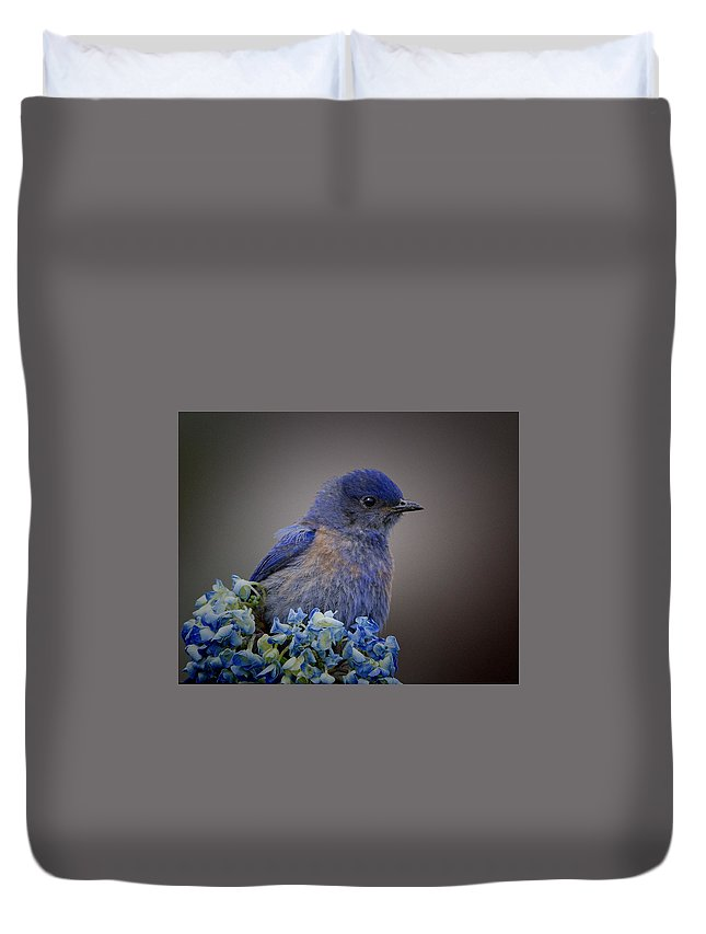 Bluebird Duvet Cover featuring the photograph Mountain Bludbird by Bruce Benson