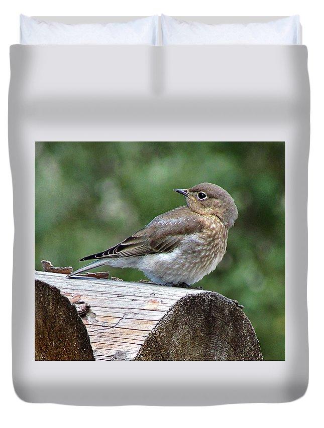 Bird Duvet Cover featuring the photograph Mountain Bluebird by Heather Tierney