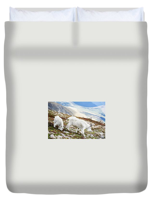 Mountain Duvet Cover featuring the photograph Mountain Goats 1 by Marilyn Hunt