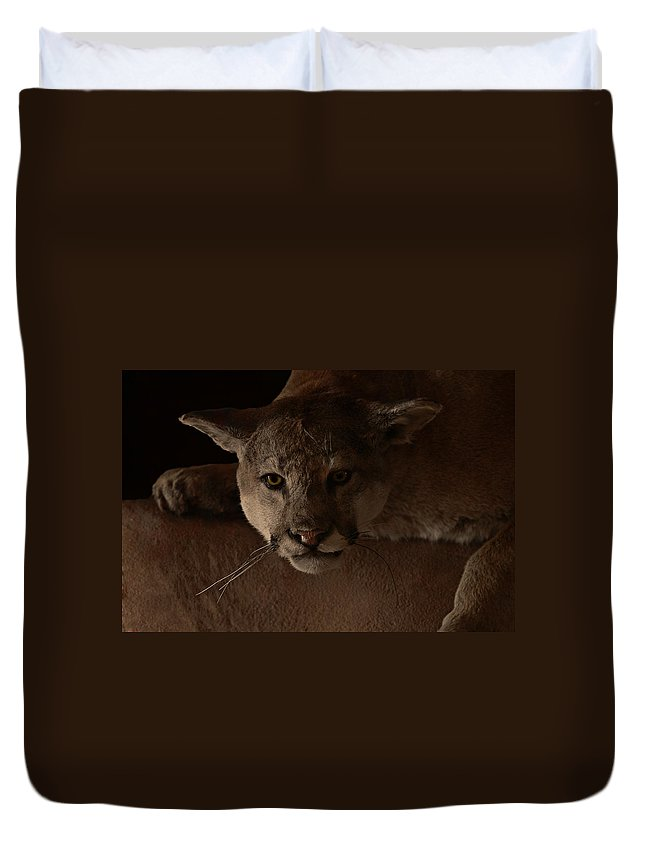 Cougar Duvet Cover featuring the photograph Mountain Lion A Large Graceful Cat by Christine Till