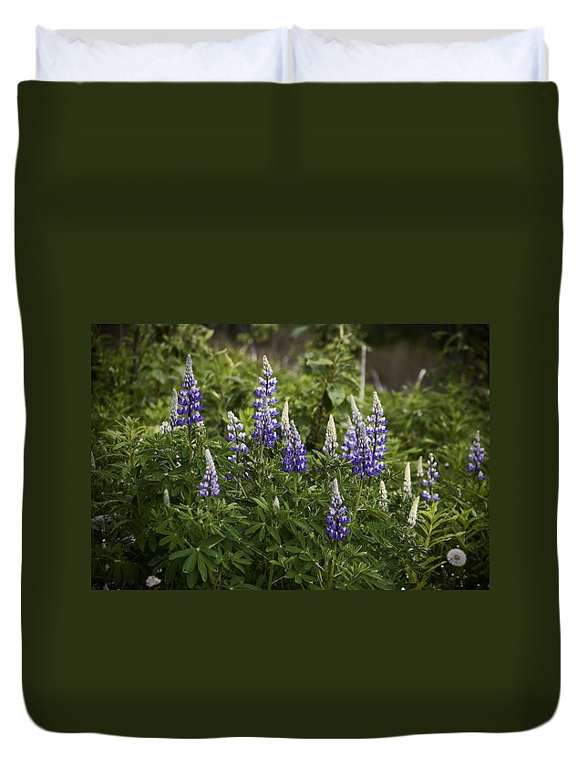Mountain Lupine Duvet Cover featuring the photograph Mountain Lupine by Phyllis Taylor