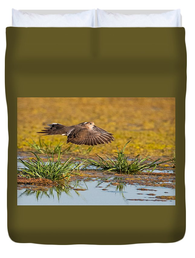 Mourning Dove Duvet Cover featuring the photograph Mourning Dove In Flight by Tam Ryan
