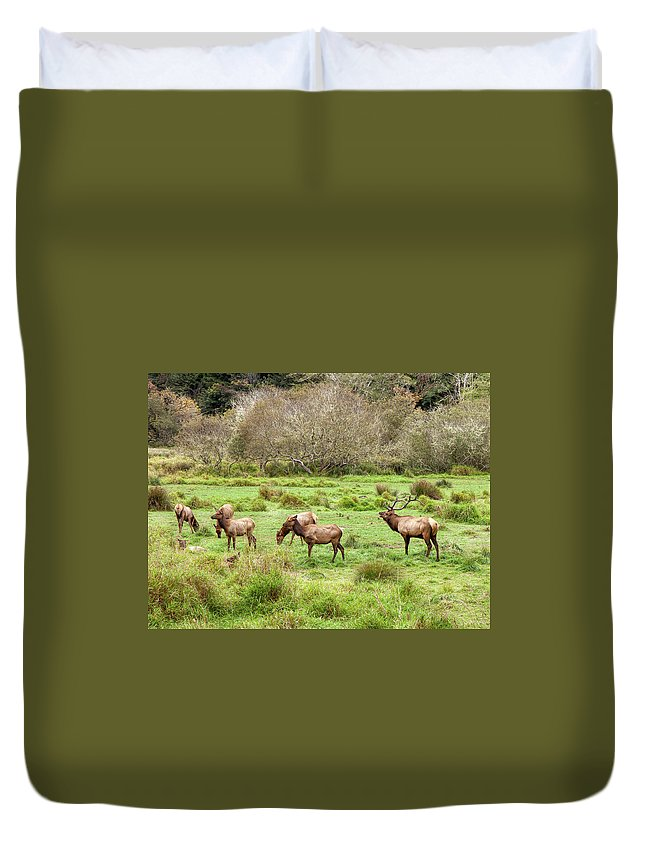 Animal Duvet Cover featuring the photograph Move Along Now by John M Bailey