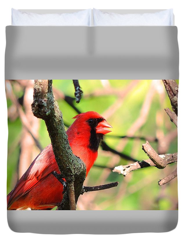 Bird Duvet Cover featuring the photograph Mr Cardinal by Jennie Perry