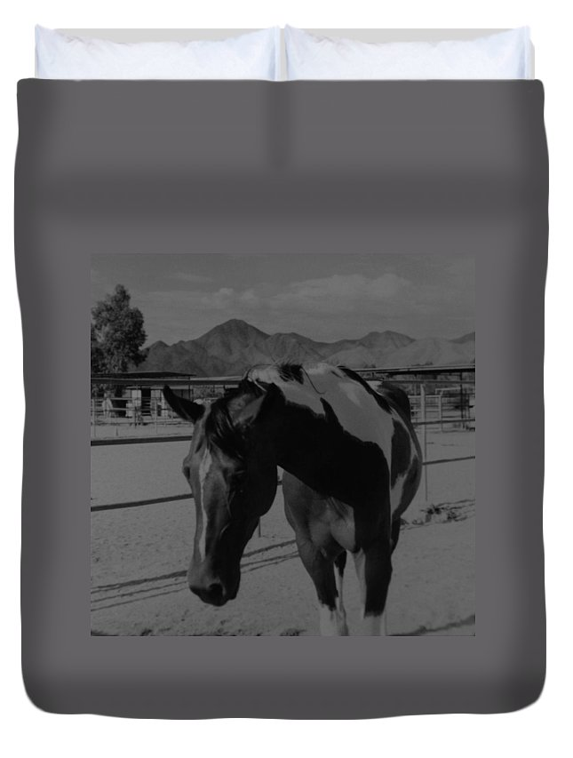 Black And White Duvet Cover featuring the photograph Mr Ed In Black And White by Rob Hans
