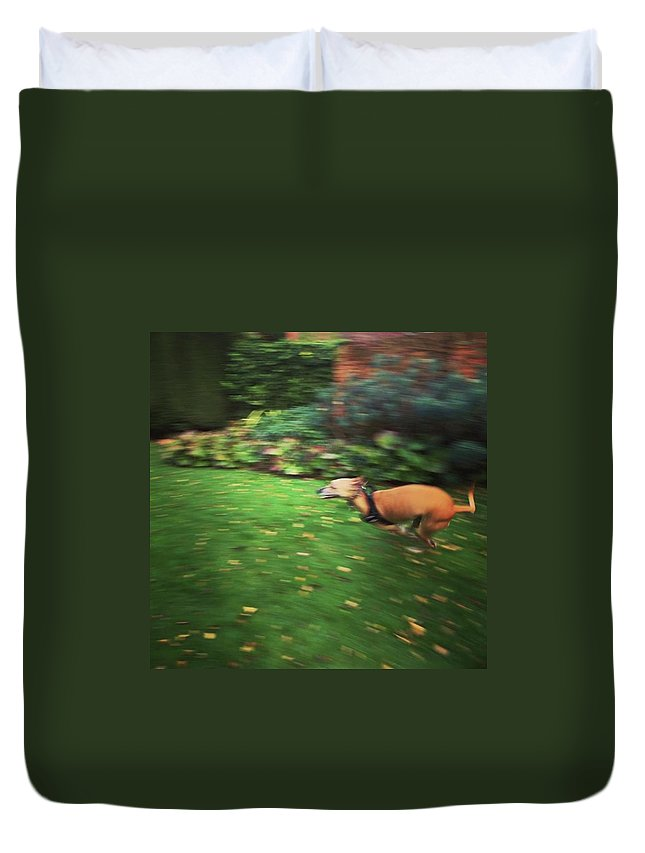 Lurcher Duvet Cover featuring the photograph Mr Finly Enjoying A Few Rapid Laps Of by John Edwards