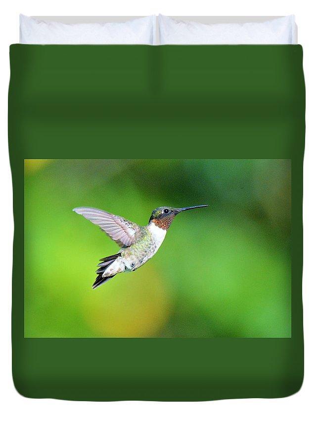 Ruby Throated Hummingbird Duvet Cover featuring the photograph Mr. Humming Bird by John Ruggeri