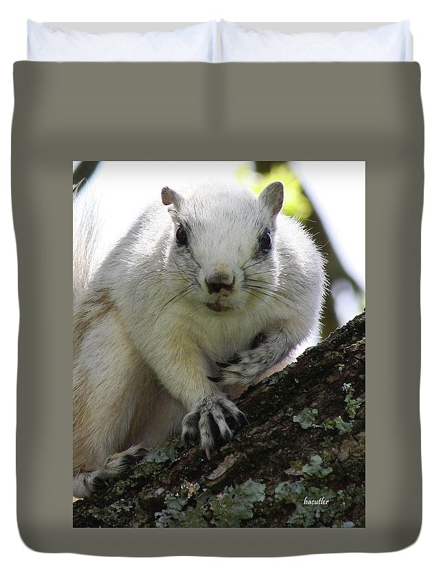 Squirrel Duvet Cover featuring the photograph Mr. Inquisitive I by Betsy Knapp