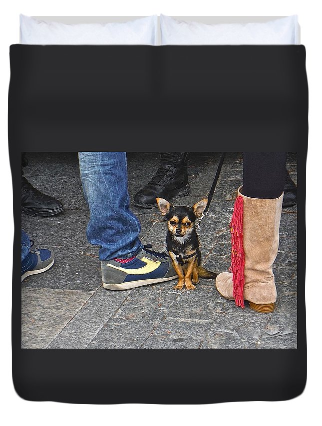 Dog Duvet Cover featuring the photograph Mr. Little by Nicholas Mariano