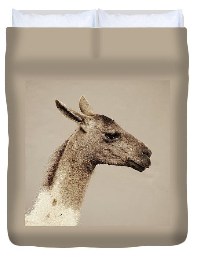 Llama Duvet Cover featuring the photograph mr Llama by Gustavo Ramirez