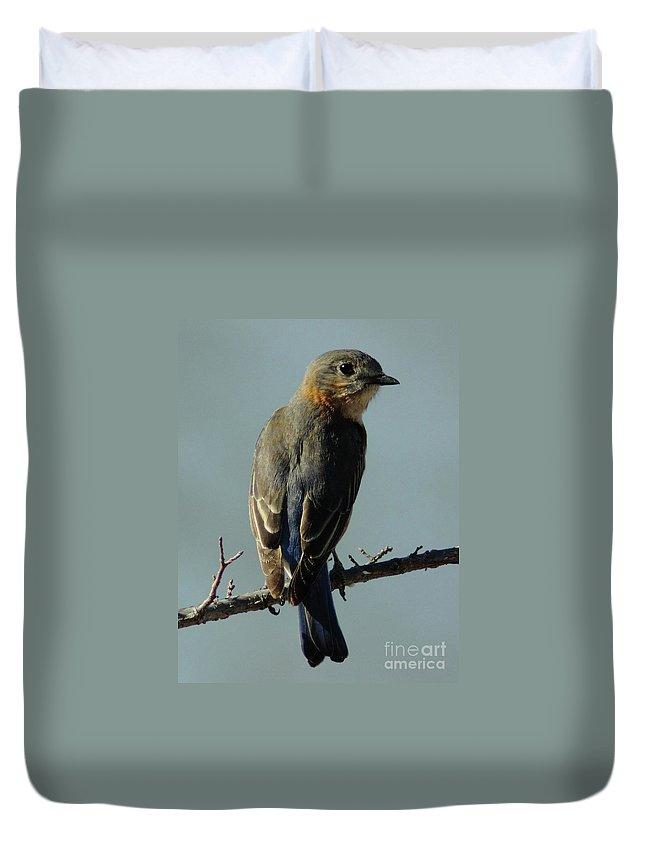 Animal Duvet Cover featuring the photograph Mrs. Bluebird by Robert Frederick