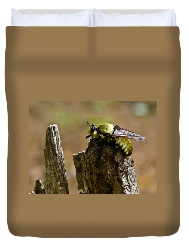 Fly Duvet Cover featuring the photograph Mrs. Fly by Douglas Barnett