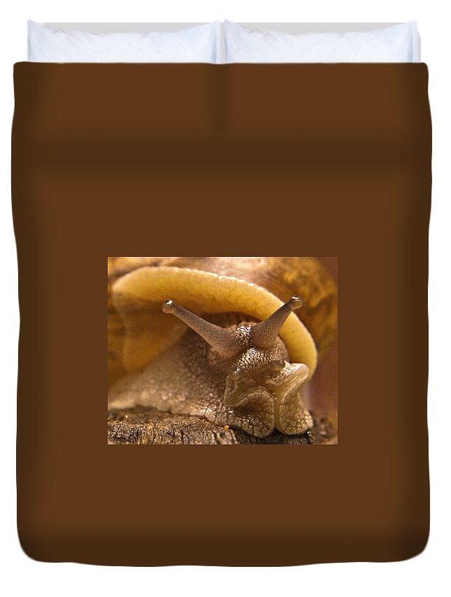 Snail Duvet Cover featuring the photograph Mrs. Snail by Douglas Barnett