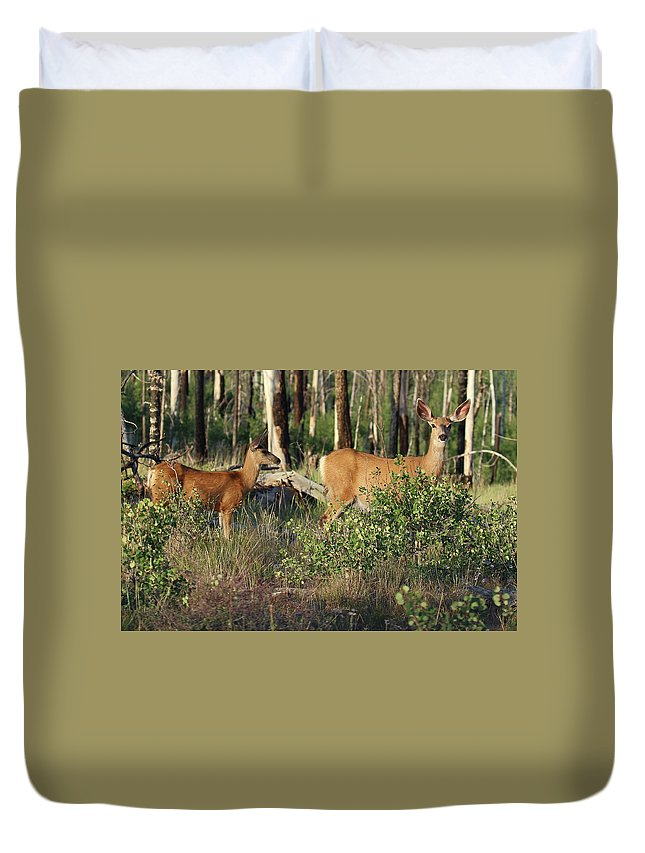 Animal Duvet Cover featuring the photograph Mule Deer Doe And Fawn by Christina Boggs