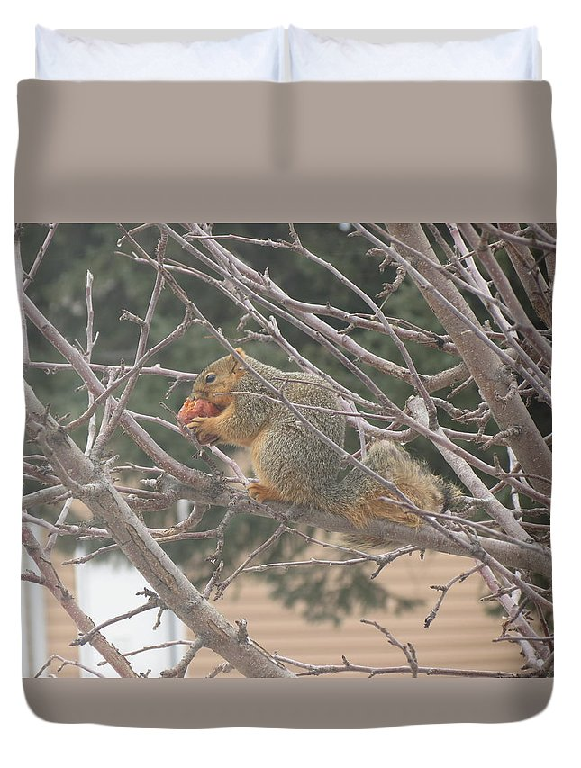 Squirrel Duvet Cover featuring the photograph Munching by Creations by Shaunna Lynn