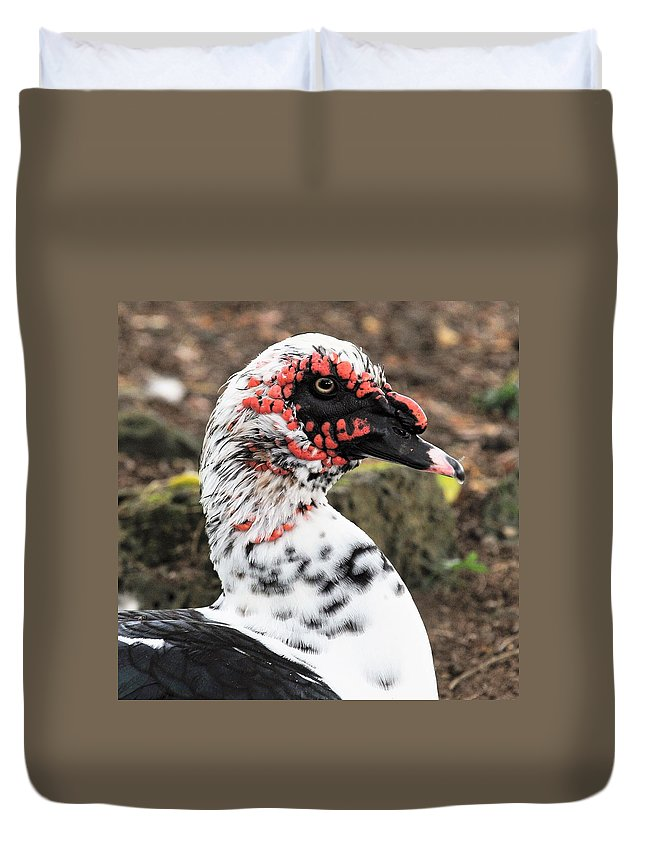Ducks Duvet Cover featuring the photograph Muscovy Duck by Heidi Fickinger
